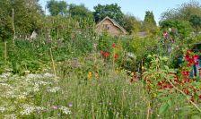 Organic Kitchen Garden