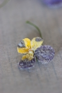 crystallised heart-ease pansy