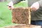 frame of honey bees
