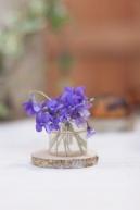 Devon violets